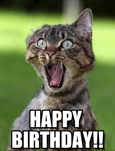 funny_happy_birthday_cat_meme__grumpy_cat___why_are_you_stupid_1
