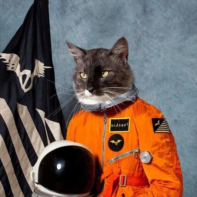 cat meme 3