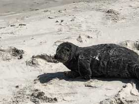 Seal close a