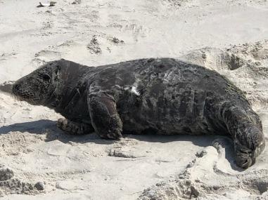 Seal close b